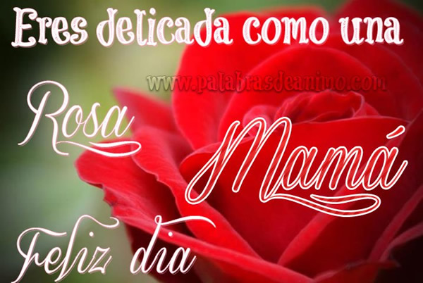 dia-de-la-madre_047
