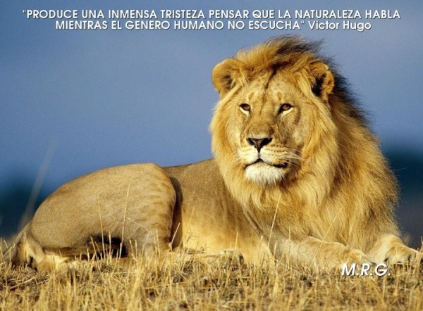 animal.jpg10