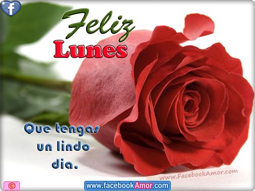 Imágenes Con Flores Y Frases De Felíz Lunes Para Compartir