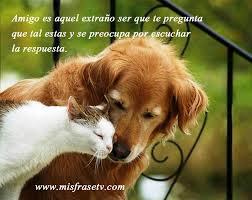 amigofrase4