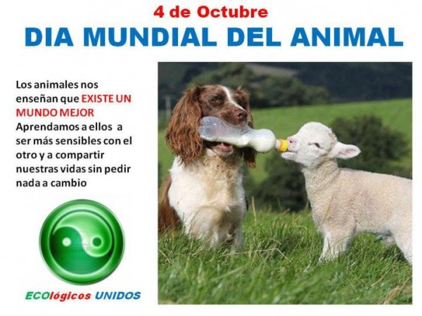 animalesfrases1