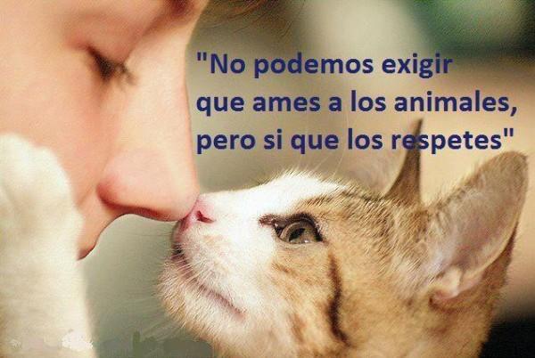 animalesfrases2