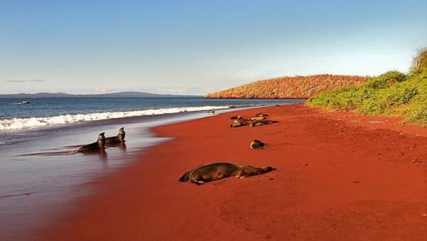 paisaje galapagos playas-unicas-mundo-playa-arena-roja-rabida-galapagos