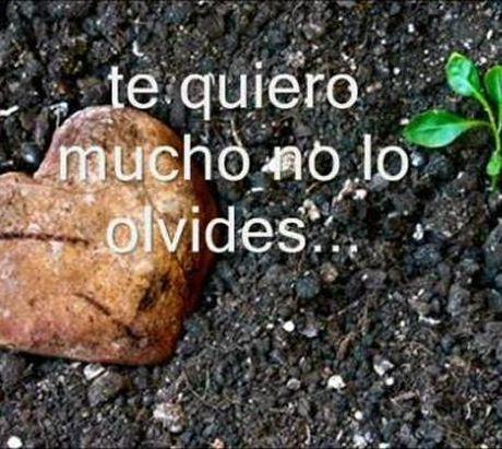 Imagen Te Quiero Mucho No Lo Olvides(1)