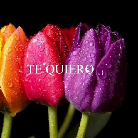 Imagen Te Quiero