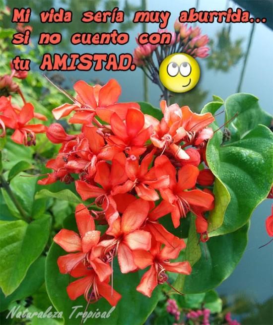 Imágenes Bonitas Con Flores Y Frases De Amistad Para