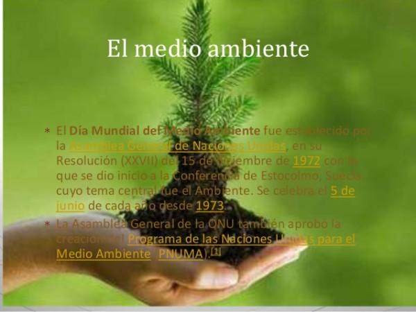 carteles Dia del Medio Ambiente  (8)