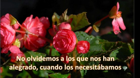mensajes de amistad con flores  (3)