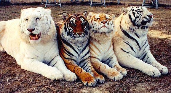 Animales - Día del Animal  (62)