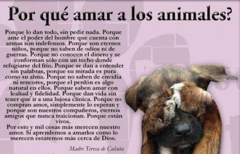 Frases Día del Animal  (10)
