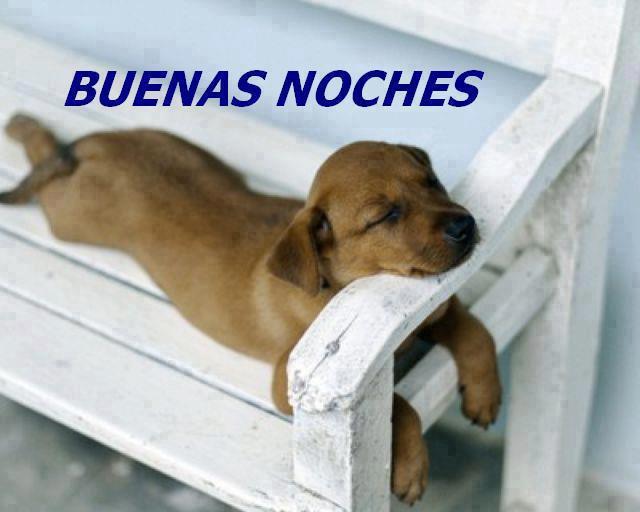 buenas-noches-perrito
