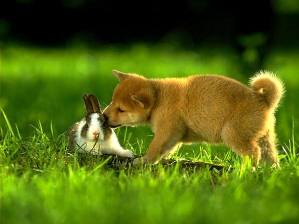 conejo-perrito