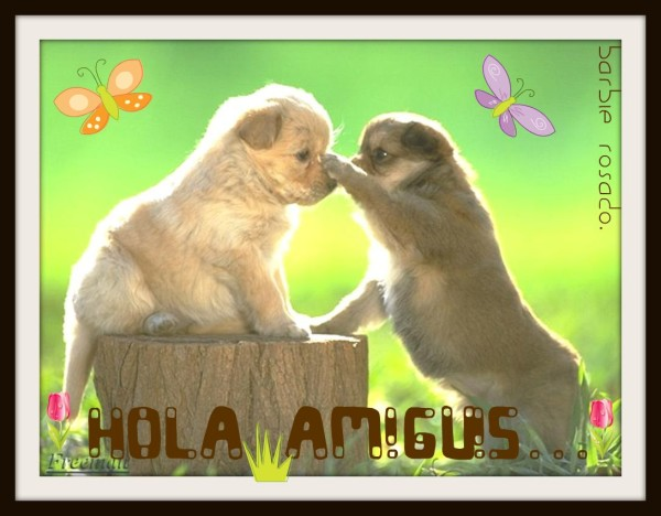 hola-perritos