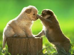 perritos tiernos  (10)