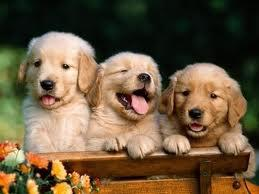 perritos tiernos  (11)