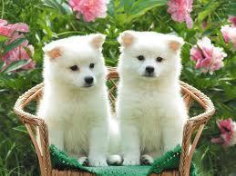 perritos tiernos  (13)