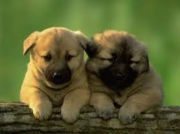 perritos tiernos  (6)