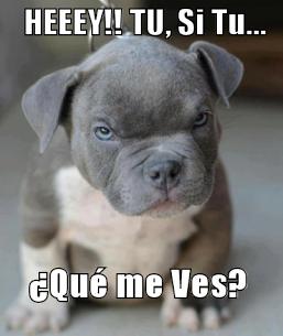 30 Imágenes Graciosas De Memes Con Animales Para Compartir