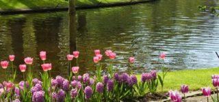 Imágenes bellas con frases de bienvenida primavera