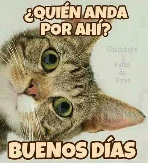Imagenes Chistosas Con Frases De Buenos Dias Para Whatsapp Y