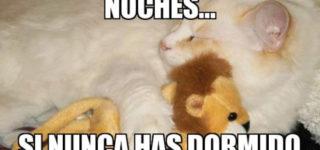 """49 Imágenes divertidas con frases de """"Buenas Noches"""" para Whatsapp"""