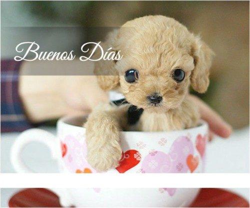 Imágenes De Buenos Días Con Frases Alegres Y Bonitas Para